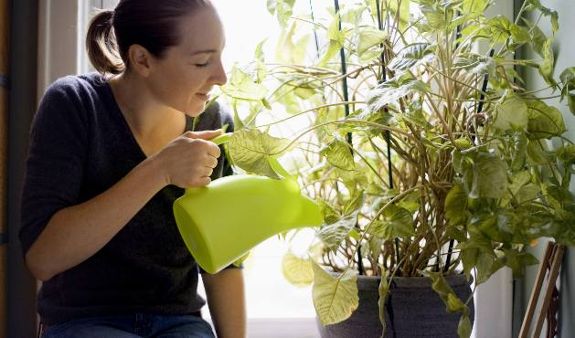 Plantas no quarto - Foto Getty Images