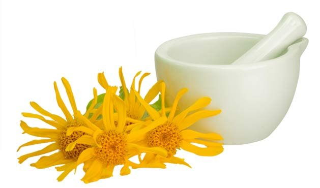 Arnica - Getty Images