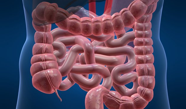 intestino - Foto: Getty Images