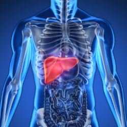 liver - Photo: Getty Images